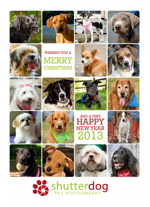 Happy Holidays from Shutterdog Pet Photography