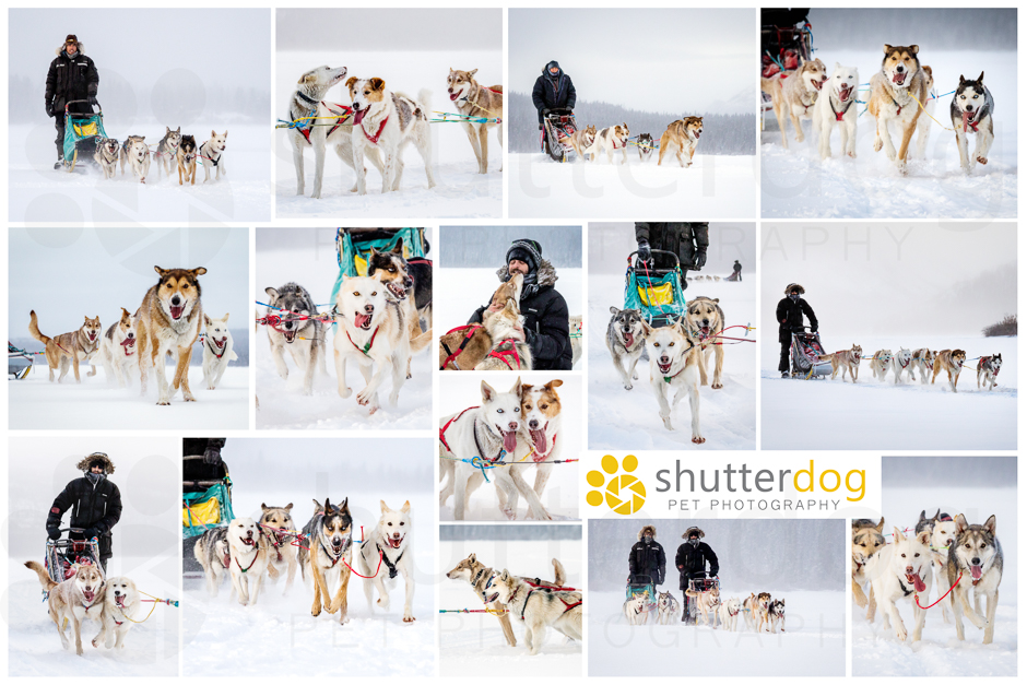 a collage of dogsledding photos