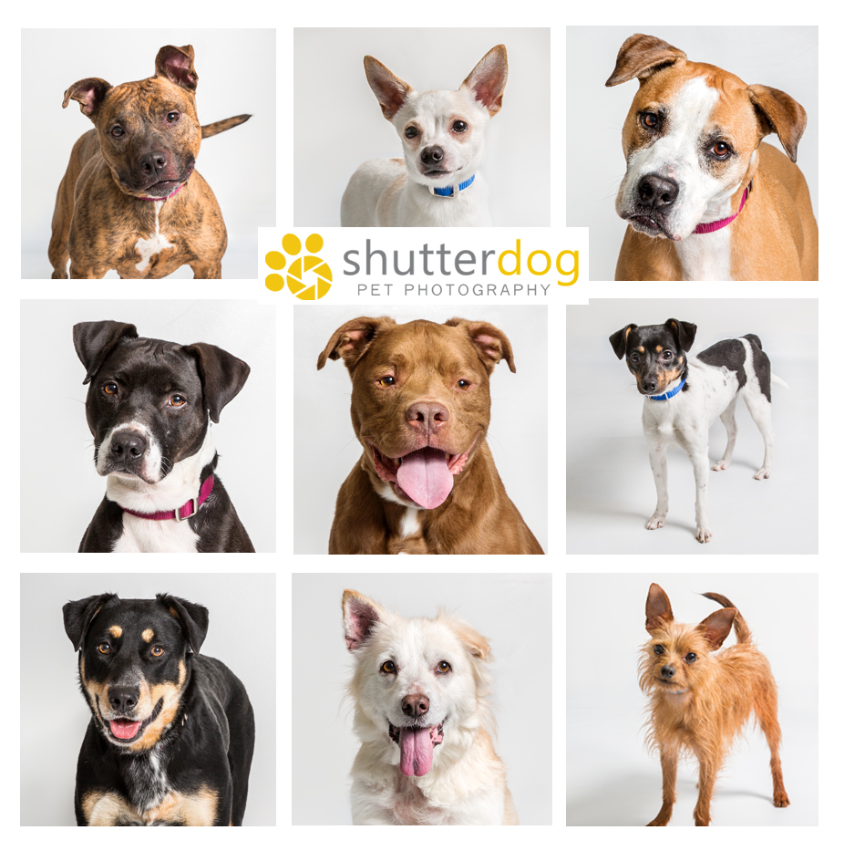 collage of adoptable dogs