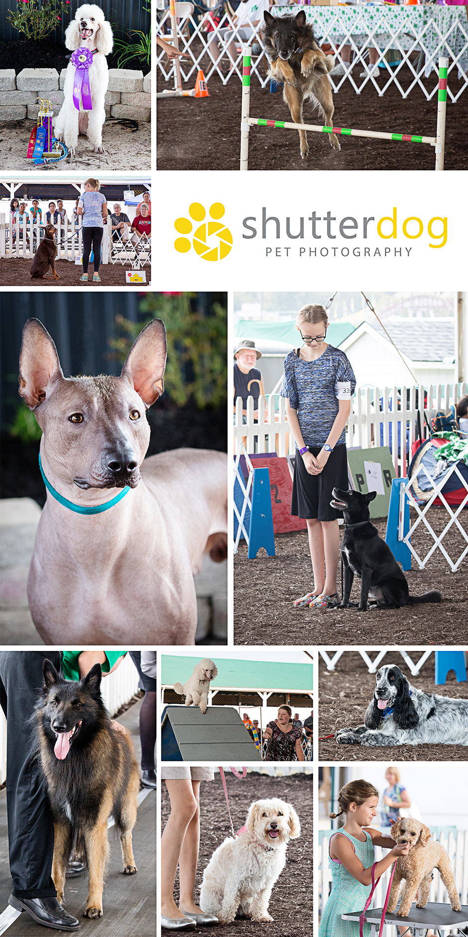 favorite images from the 2017 4-H dog show at the Great Frederick Fair