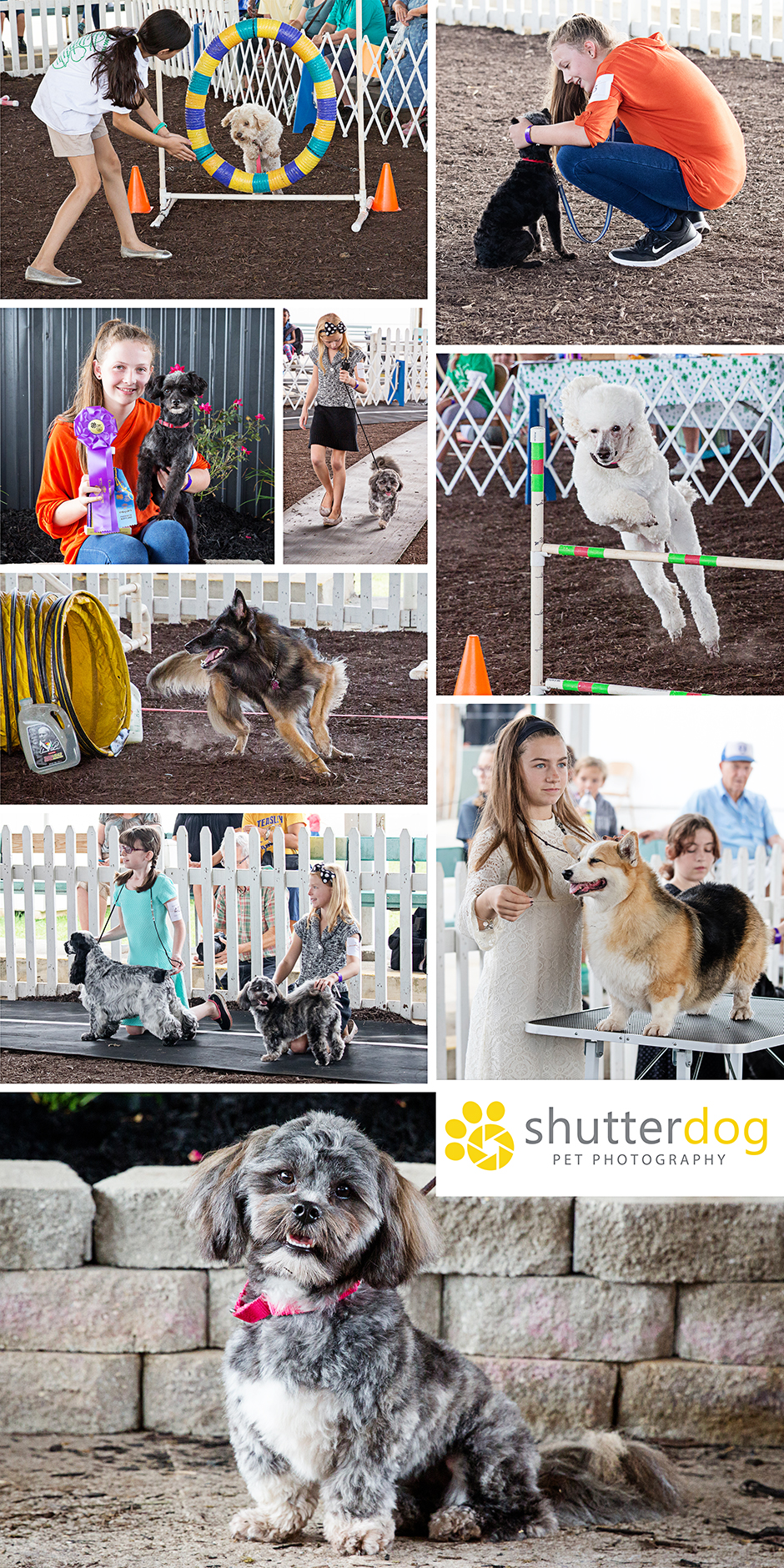 more favorite images from the 2017 4-H dog show at the Great Frederick Fair